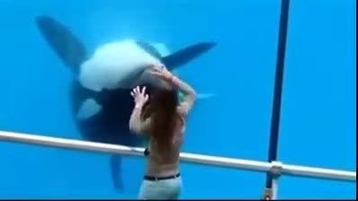 زیبا ترین و تربیت شده ترین و جالب ترین نهنگ دنیا