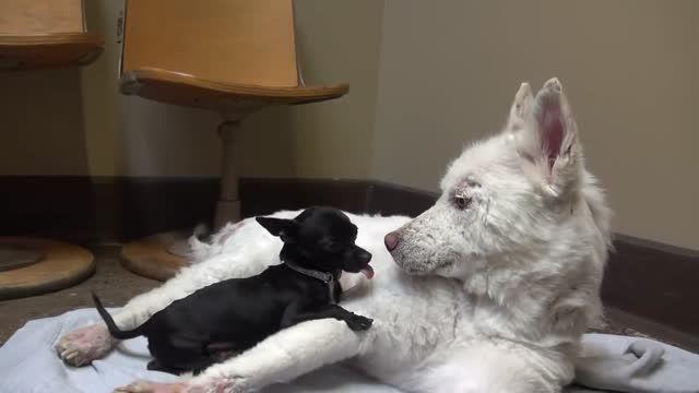 نجات سگ زیبا و حادثه عجیب..! HD