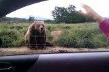 دست تکان دادن خرس برای خانومه! بسیار جالب!!!