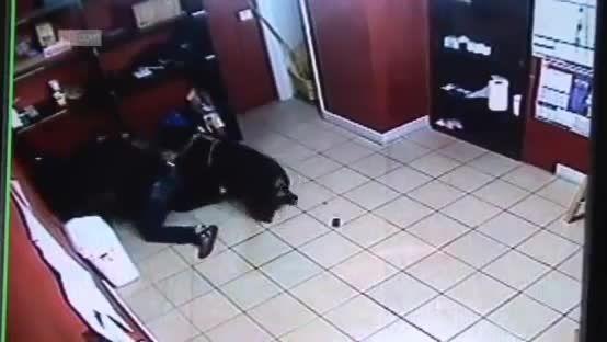 نجات انسان توسط  سگ