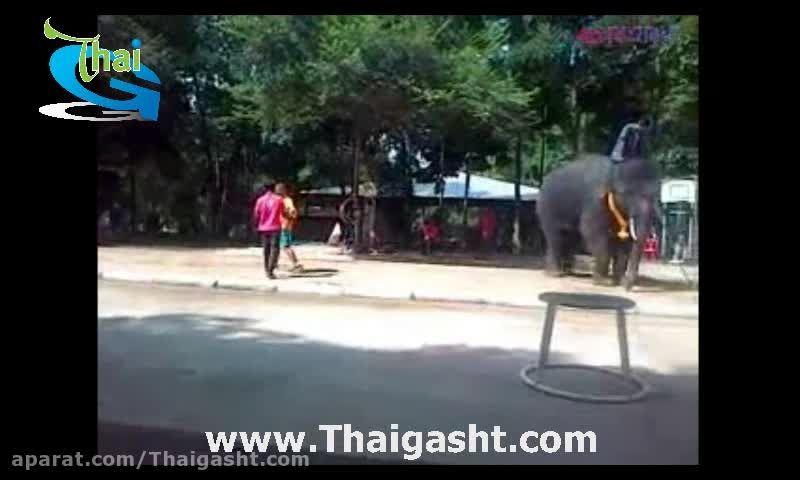 فیل فوتبالیست تایلندی (www.Thaigasht.com)
