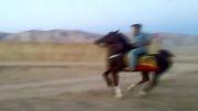 اسب سیمرغ(سیمرغ-مارال)