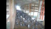 کبوتر خانه مدرن با ورودی بنزینگ