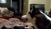 این سگ از جولیا رابرتز بدش میاد!