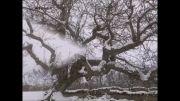 طبیعت زمستانی روستای مسک