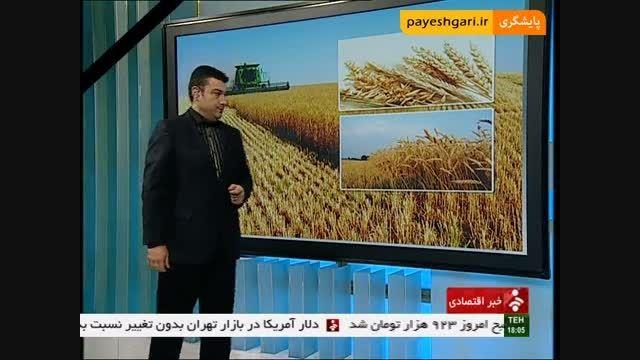 افزایش ضریب خود اتکایی در تولید گندم کشور