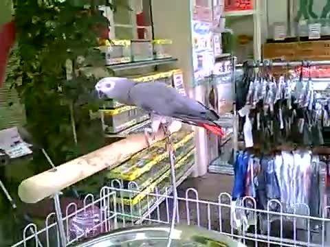 بازار پرندگان و حیوانات خانگی توکیو
