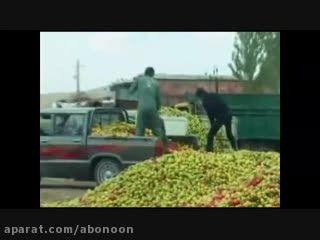دولت برای تحریک تقاضای سیب هم هزینه می کند؟