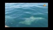 جزیره قشم.. آبهای ساحل نقره ای جزیره هنگام..این هم دلفینها!
