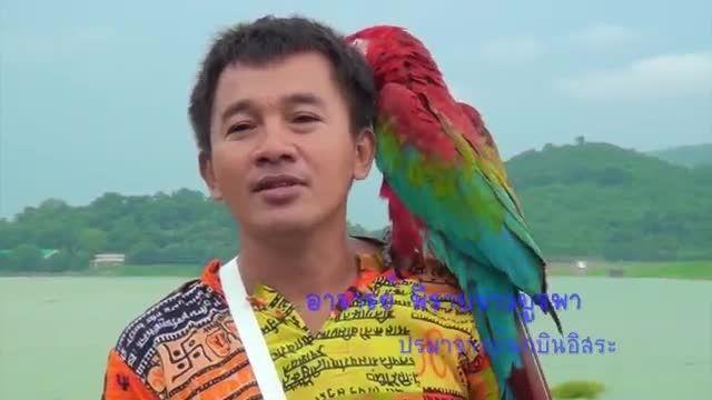 روز پرندگان در کشور تایلند و پرواز آزادانه طوطی ها