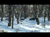 شکار گراز در بلغارستان