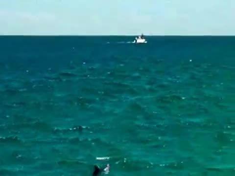 ماهیگیری تماشایی در سواحل استرالیا