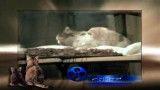 گربه های سیاه بیشه و حمله به كبابی