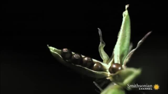 ویدیویی عجیب از گل هایی عجیب/30 میلیون بازدید در یوتیوب