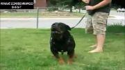 10 سگ وحشی و خطرناک جهان...