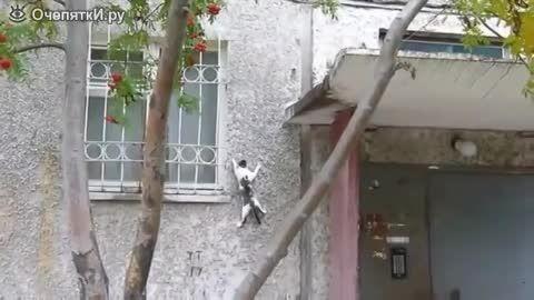 گربه هایی که از دیوار راست بالا میروند