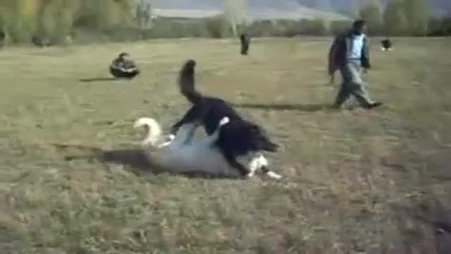 سگ ظالم ملایری