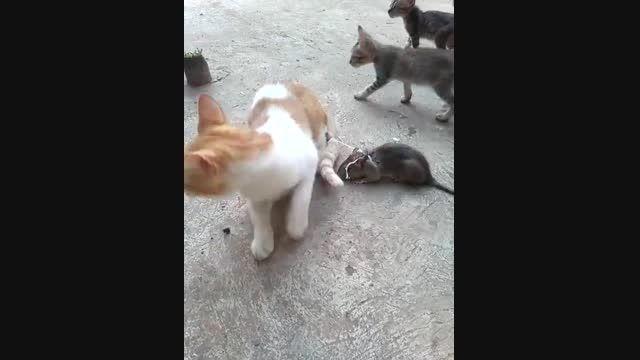 موش دنبال گربه میکند و گربه از ترس فرار میکندواقعادیدنی