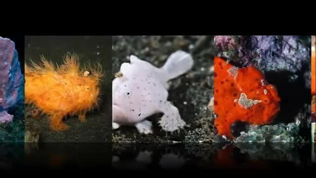 معرفی 10 موجود خارق العاده باورنکردنی در عمق دریاها