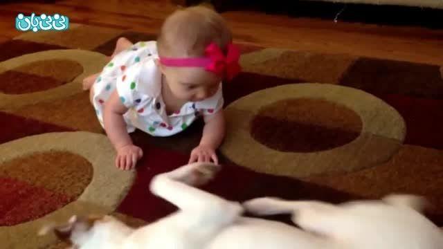 وقتی یک سگ چهار دست و پا راه رفتن یاد بچه  می دهد!
