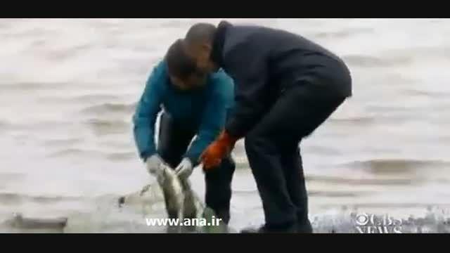 خرابکاری ماهی«سالمون» روی کفش اوباما