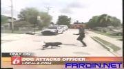 حمله سگ به افسر پلیس (دیدنی)