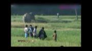 فیل مرد را له کرد اما زنده ماند
