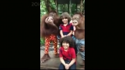 همكاری میمون های باغ وحش با مردم