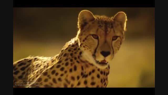 تصاویر آهسته از حیوانات بسیار زیبا