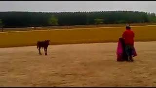 از گاو باید ترسید هرچند کوچک باشد