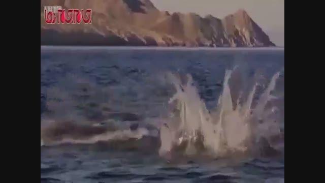 شیرجه زیبای سفره ماهی فیلم کلیپ گلچین صفاسا