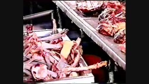 فرایند تولید سوسیس و کالباس در ایران