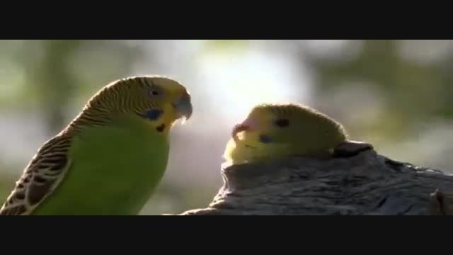 شبکه سهند - مستند مرغ عشق ها ، دوستی انسان و حیوان