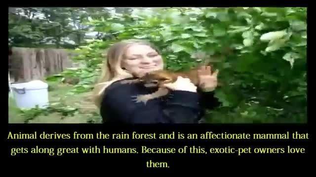 حیوانات وحشی که  حیوانات خانگی شدند..!! خیلی جالبه