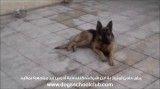 مسابقه داخلی باشگاه مدرسه سگ ها، فینالیست 2