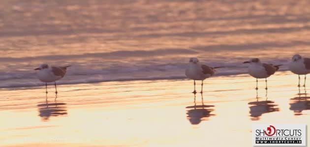 Video Traxx HD - تصاویر مناظر طبیعی و حیات وحش