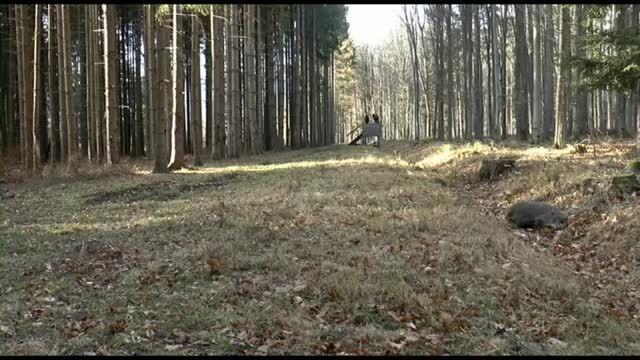 شکار گراز 01