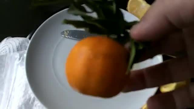 آموزش فوق العاده کاشت پرتقال با کمک دانه پرتقال!
