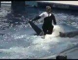 نهنگ قاتل!