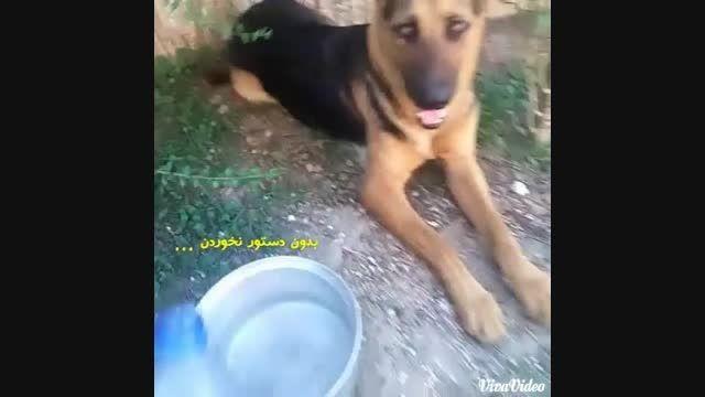 سگ جرمن تیدا بدون دستور آب نمی خورد . با دستور قهر ...