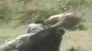 حمله شامپانزه به انسان