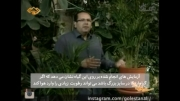 گلستان علی - آموزش نگهداری از گیاه اریکا-