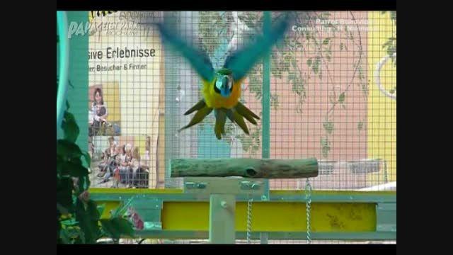 مرکز نگهداری و آموزش طوطی سانان در آلمان 3