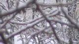 خنده دار-زمستان-برف-درخت-سرما-ایران-اصفهان-چادگان-شادی