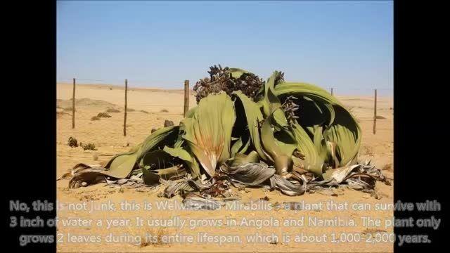 معرفی وقایع باورنکردنی و ترسناک گیاهان آدم خوار