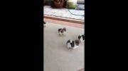 توله سگها