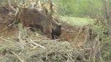 نجات خرس در هزار جریب بهشهر