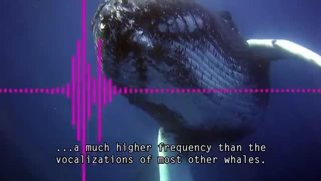 5 تا از مرموز ترین صداهایی که تا به حال ضبط شده اند
