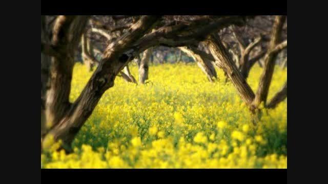 غزل 077- بلبلی برگ گلی خوش رنگ در منقار داشت