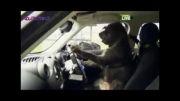 آموزشگاه رانندگی  سگها!